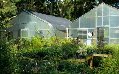 Pourquoi faire construire une serre dans son jardin ?