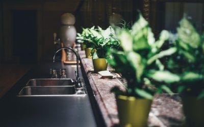 Décorez votre intérieur de manière inattendue avec des plantes