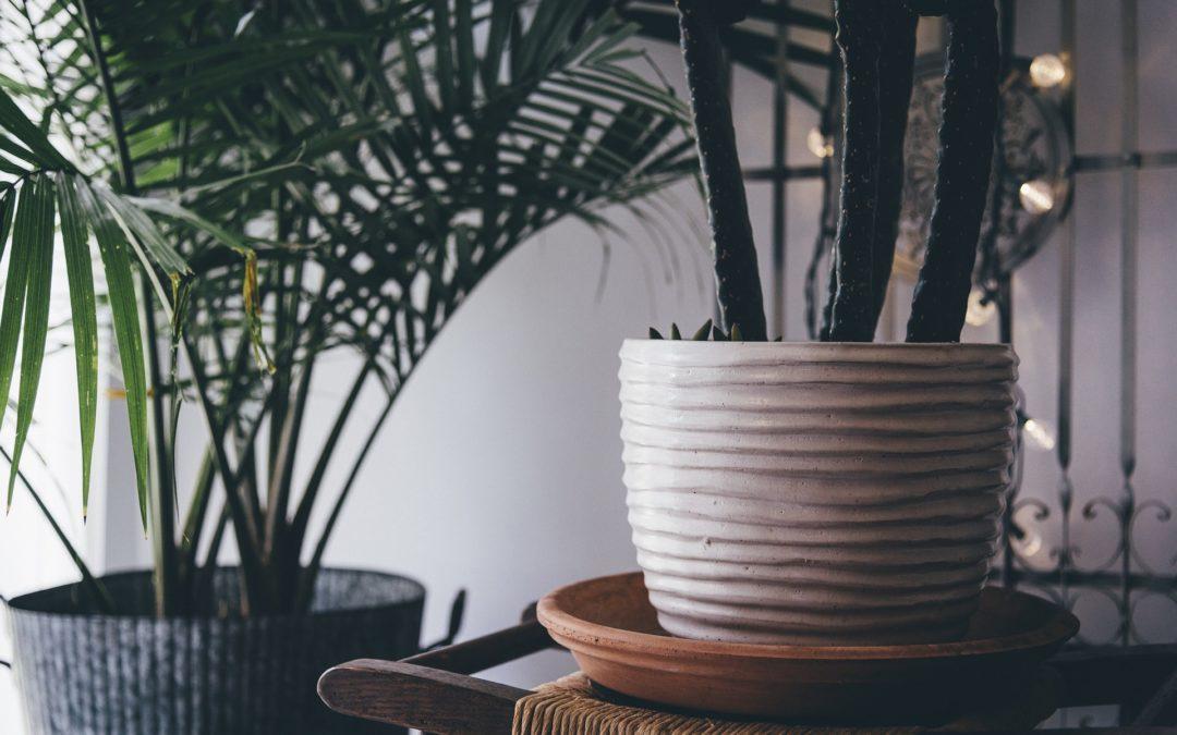 Les 5 techniques à connaître pour prendre soin des ses plantes
