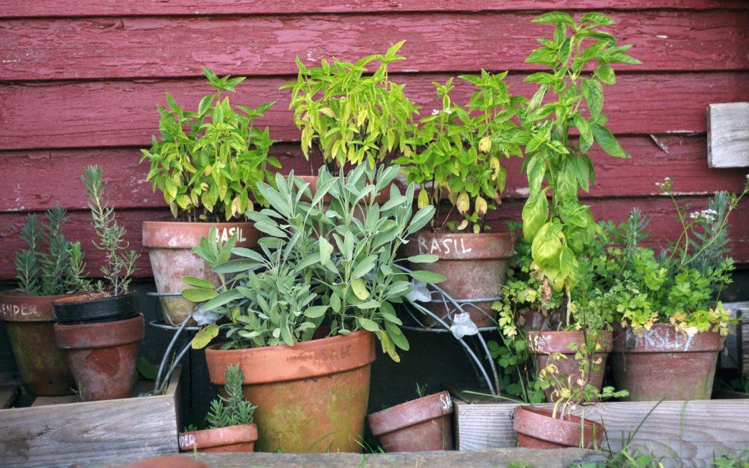 Cultivez des plantes anti-stress dans votre jardin